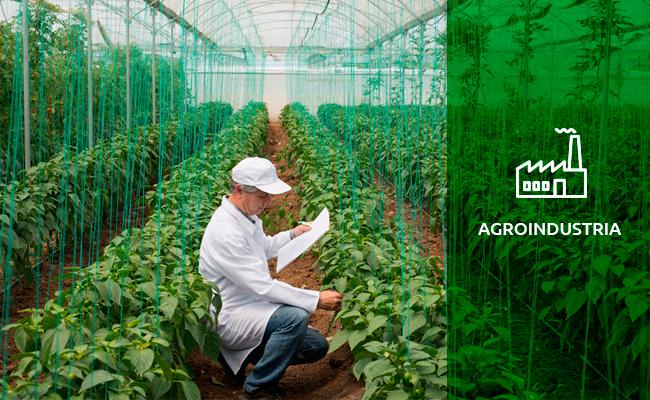 1-pic-agroindustria